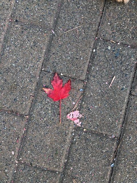 小さい秋見つけた♬ in バンクーバー