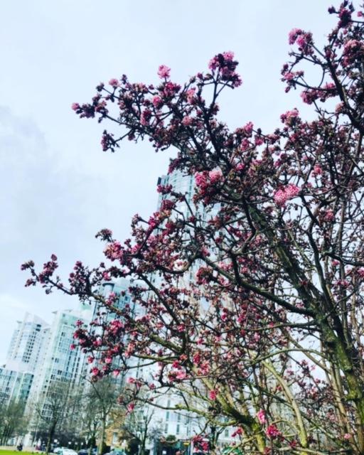 春が来た♬!?